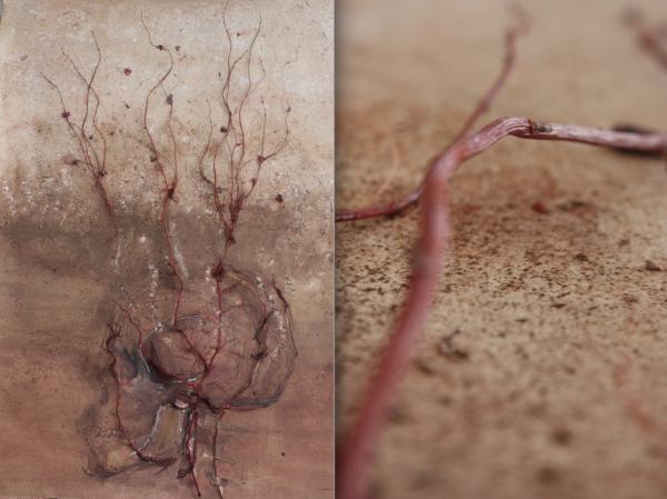 Cráneo con ramas©RossanaZaera